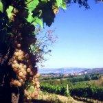 Corciano castel di vino 2